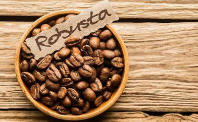 Cà phê Ghana: Vùng Robusta (Phần 2)